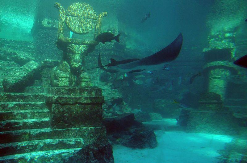 Vacation Like A Vip At The Cove Atlantis In The Bahamas