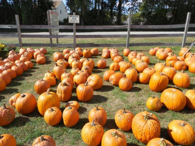 FAMILY EXPERIENCES: Apple and Pumpkin Picking Trips by Helicopter