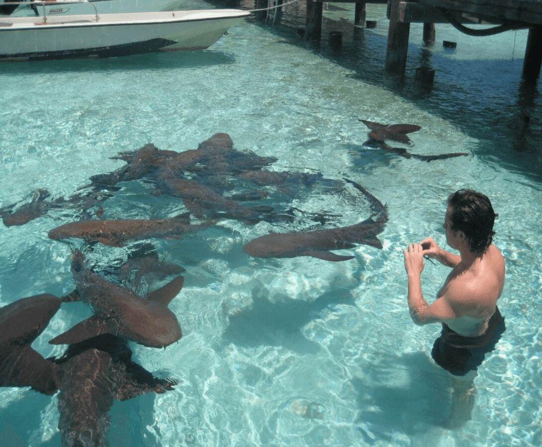 sharks-2019-08-02--0-1